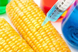 Germania a început demersurile pentru a interzice culturile de organisme modificate genetic