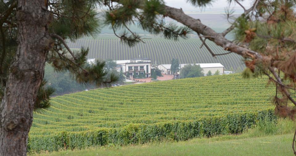 Turismul la crame – antidotul vinurilor românești la coronavirus