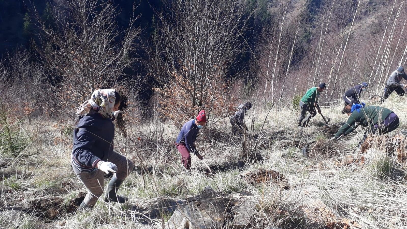 ZENTIVA plantează 20 000 de arbori pentru a reface o zonă din Munții Făgăraș