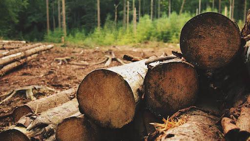 Majoritatea operatorilor economici din industria lemnului estimează blocaje în activitate, după implementarea SUMAL 2.0