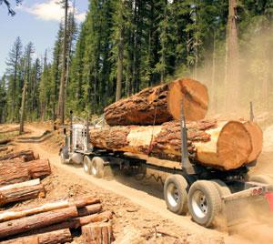Industria silvică şi de prelucrare a lemnului din România are o pondere de 3,5% la formarea PIB, dacă se iau în considerare şi efectele indirecte, arată un studiu PwC România