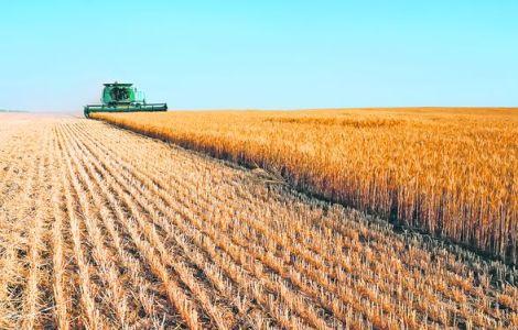 România a exportat 5,059 milioane de tone de grâu în anul 2013/2014, în creștere cu 81% față de anul anterior