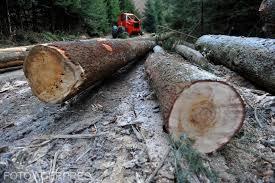Organizațiile reprezentative ale sectorului pădure-lemn resping proiectul privind evaluarea de mediu a amenajamentelor silvice