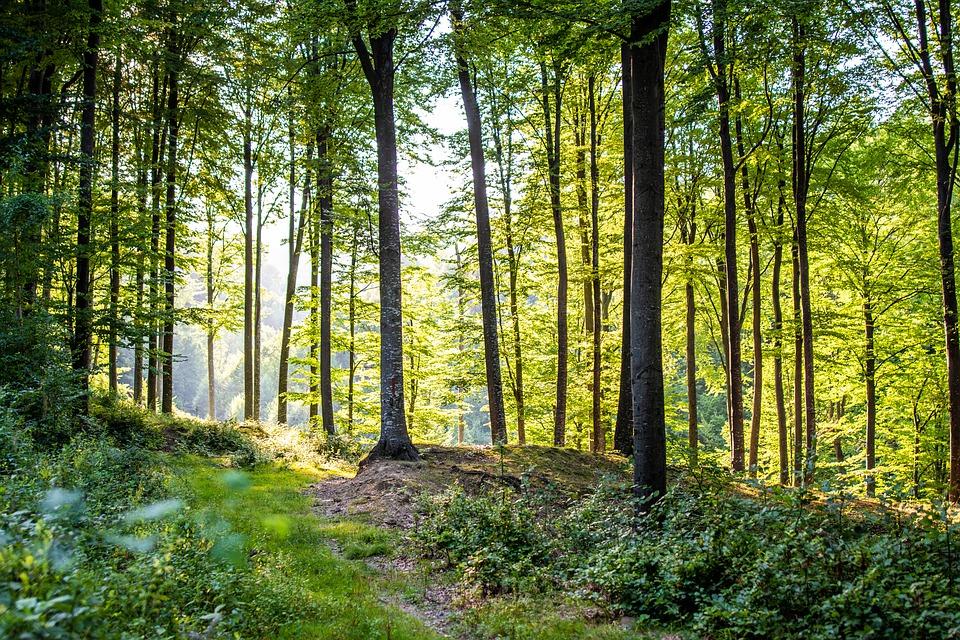 Şerban Niculescu (WWF): România îşi vinde pădurile pe un volum estimat grosier, înainte ca arborii să fie doborâţi