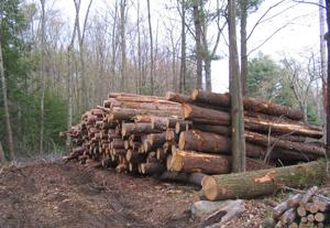 """Avertismentul dureros al Greenpeace: din pădurile românești dispar anual 8,8 milioane metri cubi de lemn. """"Legislația actuală servește doar intereselor câtorva"""""""