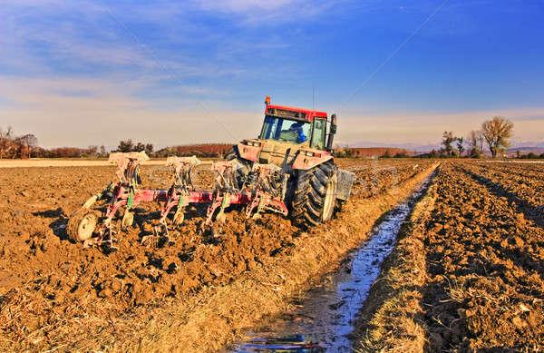 Seceta ar putea înjumătăţi producţia de cereale din România în acest an