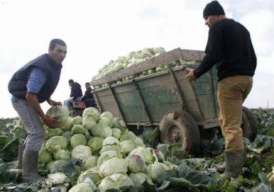 România este pe primul loc în UE în ceea ce privește populația ocupată în agricultură