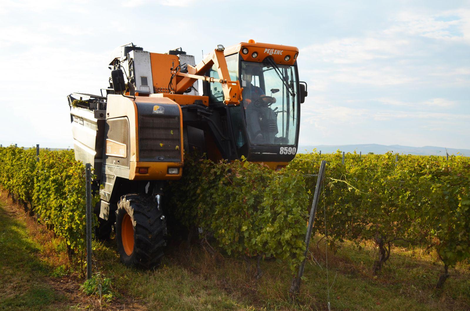 Producătorul de vinuri Jidvei a avut în 2019 afaceri de peste 40 milioane de euro