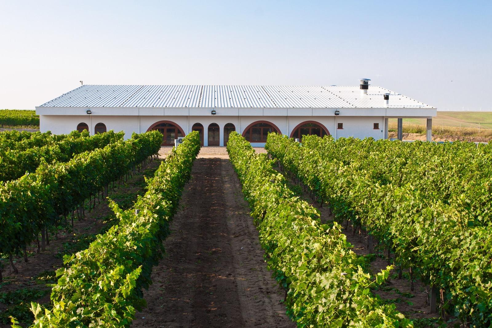 Producătorul român de vin ecologic Vifrana se listează la Bursă